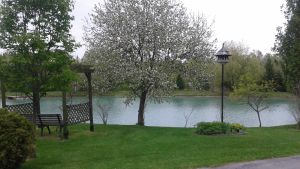 Apple Tree and Pond
